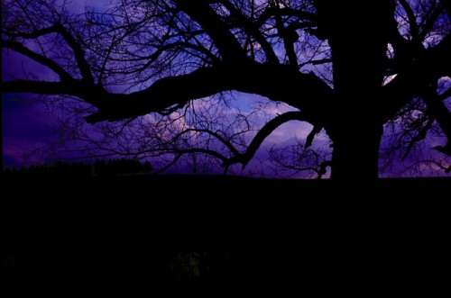 albero_buio_luce.jpg
